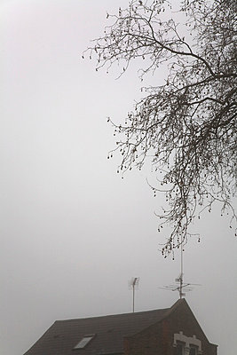 Roof top and tree in fog - p3881766 by Ulrike Leyens