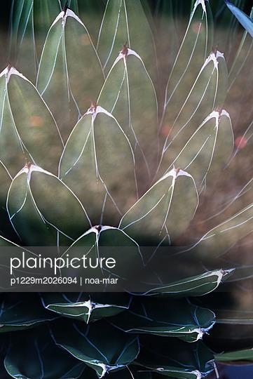 Pflanze - p1229m2026094 von noa-mar