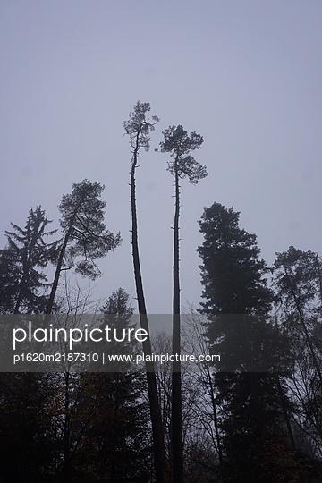 Wald - p1620m2187310 von