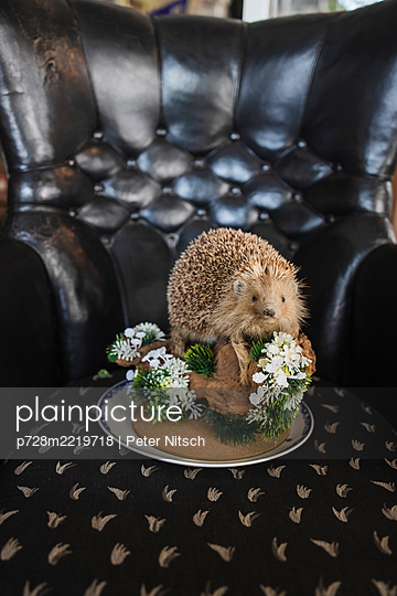 Stuffed hedgehog on an armchair - p728m2219718 by Peter Nitsch