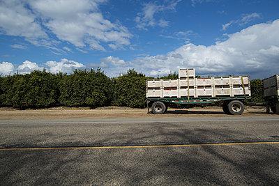 Orange shipment with truck - p1134m1440779 by Pia Grimbühler