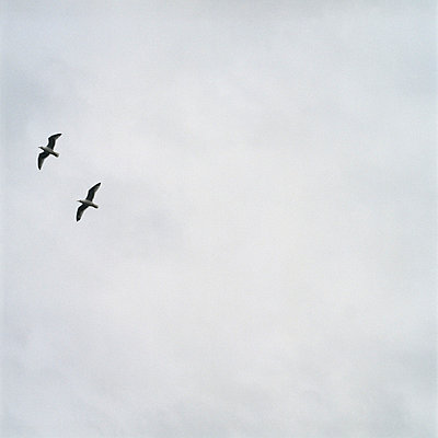 Two birds - p5790017 by Yabo