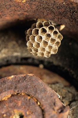 Wesp's nest - p8850081 by Oliver Brenneisen