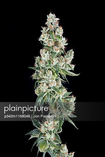 p343m1168046 von Jon Paciaroni