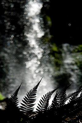 Farn vor Wasserfall - p1016m792526 von Jochen Knobloch