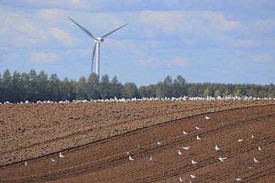Schleswig-Holstein, frischer Acker - p1016m934783 von Jochen Knobloch