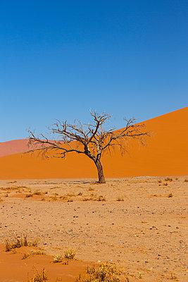Toter Baum, Sossusvlei - p975m2076951 von Hayden Verry