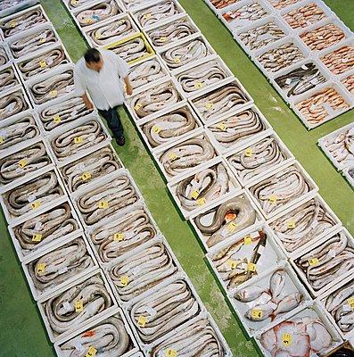 A fishmarket near Cudillero, Asturias, Spain - p429m1148984 by Philip Lee Harvey