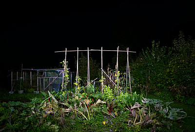 Vegetable garden - p1132m2027941 by Mischa Keijser
