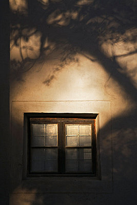 Shadow of a tree on a wall - p3486282 by Svenne Nordlöv