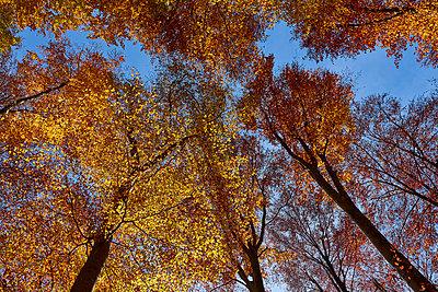 Herbst 4 - p587m1466526 von Spitta + Hellwig