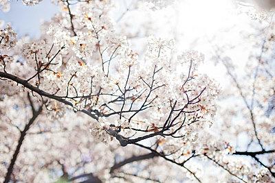 Frühling - p956m709713 von Anna Quinn