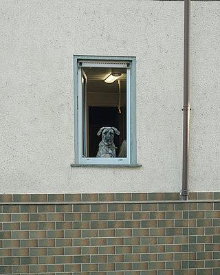 Hund im Fenster - p1425m1492561 von JAKOB SCHNETZ