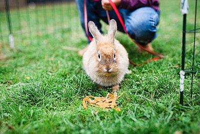 Rabbit on grass - p312m2079716 by Anna Johnsson