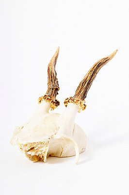 Skull - p4092574 by timokerber