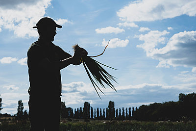 Farmer standing in a field holding freshly picked spring onions. - p1100m2271490 by Mint Images