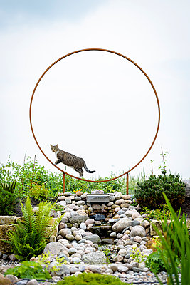 Katze im Ring - p1273m1183408 von melanka