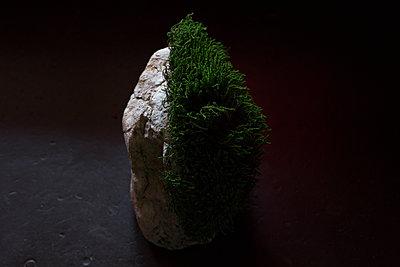 Stein mit Frisur - p1308m2057160 von felice douglas