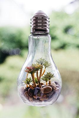 Glühbirne als Vase - p1621m2291758 von Anke Doerschlen