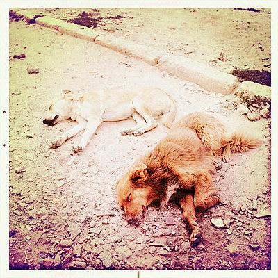 Zwei schlafende Hunde - p819m972597 von Kniel Mess