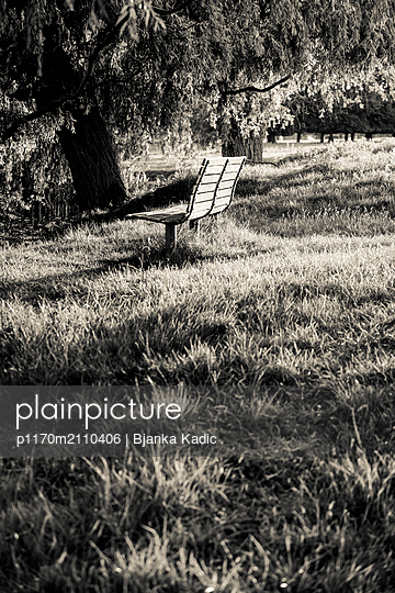 Woodland Park, Solitary bench in woodland park - p1170m2110406 by Bjanka Kadic
