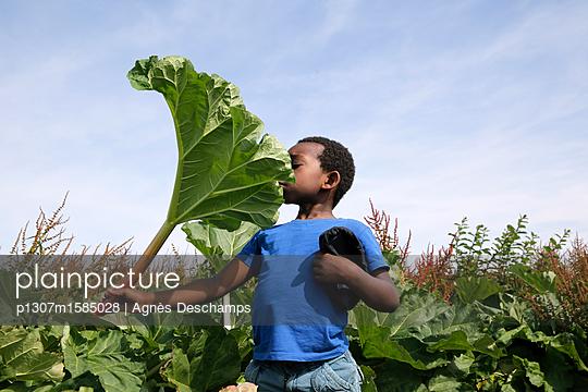 Junge spielt mit einem riesigen Blatt - p1307m1585028 von Agnès Deschamps
