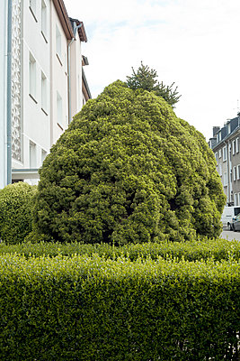 Vorgarten - p1043m1134962 von Ralf Grossek