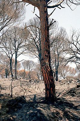 Waldbrandwüste - p2684246 von Stephan Sasek