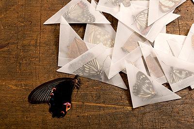 Schmetterlingessammlung - p451m919263 von Anja Weber-Decker