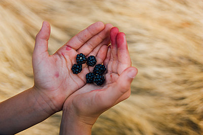 Blackberries in Hands - p1262m1083622 by Maryanne Gobble