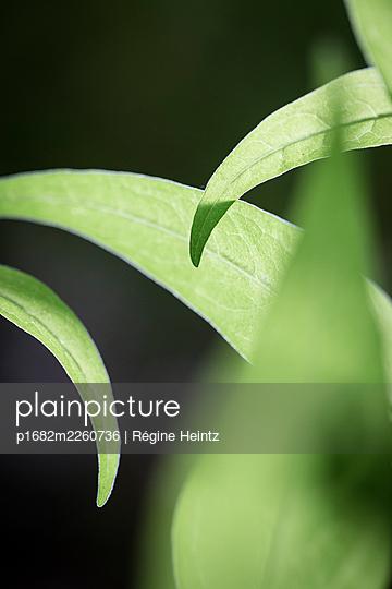 Close-up view of plants - p1682m2260736 by Régine Heintz