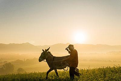 Italy, Tuscany, Borgo San Lorenzo, senior man walking with donkey in field at sunrise above rural landscape - p300m2041799 by Francesco Buttitta