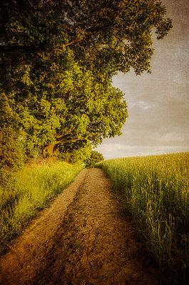 Feldweg in ländlicher Gegend - p794m1035087 von Mohamad Itani