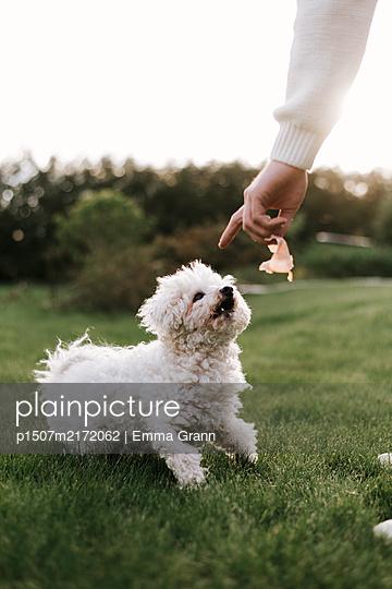 Training a dog - p1507m2172062 by Emma Grann