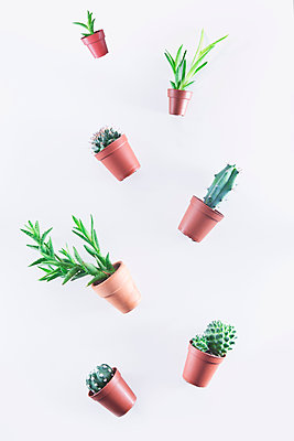 Small cacti and succulents - p1149m2027271 by Yvonne Röder