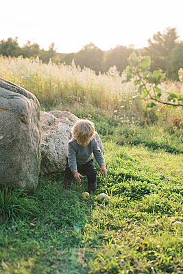 Little boy trying to pick up apples off the ground. - p1166m2151877 by Cavan Images