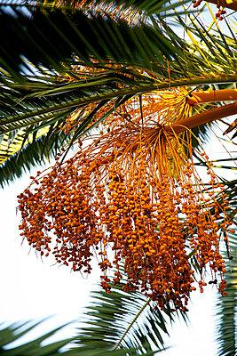 Date fruit - p606m794184 by Iris Friedrich