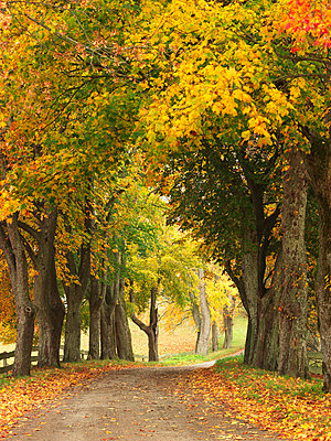 Autumn trees along country road - p312m1070471f by Michael Jonsson