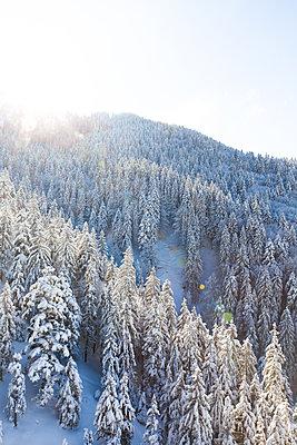 Winterzauber - p454m2099663 von Lubitz + Dorner