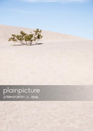 Wüstenstrauch - p758m2128761 von L. Ajtay
