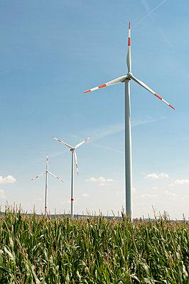 Wind turbines in maize field - p1079m1042156 by Ulrich Mertens