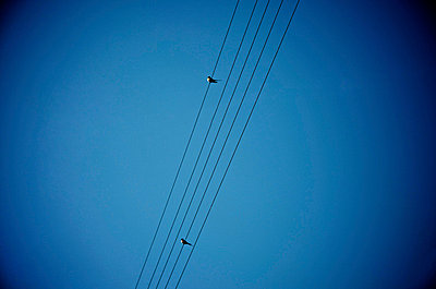 Two birds on a power line - p8130096 by B.Jaubert