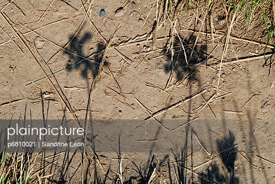 Shadows on the ground - p6810021 by Sandrine Léon
