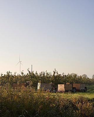 Apfelkisten vor Plantage - p1124m1069651 von Willing-Holtz