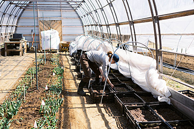 young millennial woman tending to her tulips in her farm high tunnel - p1166m2269673 by Cavan Images