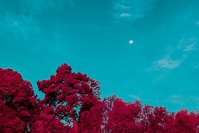 Infrared, Sky, trees and moon - p1487m2150169 by Ludovic Mornand