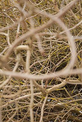 Shrubbery, close-up - p1685m2272461 by Joy Kröger