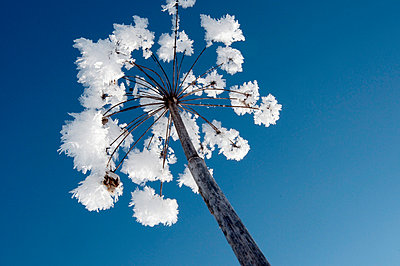 Fluffige Eiskristalle - p4510760 von Anja Weber-Decker