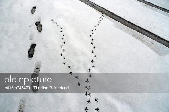 p816m745479 von Thorfinn Bekkelund