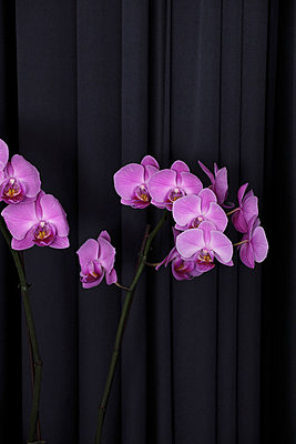 Orchidee - p483m698208 von Arne Gerson